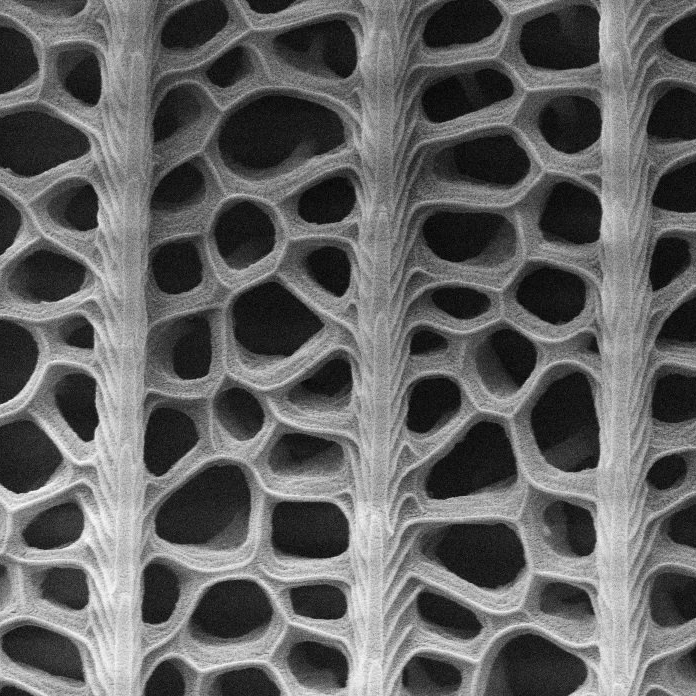Close-up of the butterfly wings (Radwanul Hasan Siddique, KIT/Caltech)